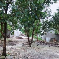Chính Chủ Bán Nhanh Nhà đất Bìa đỏ - đất Vườn 1500m2 đông Sơn - Tam điệp - Ninh Bình