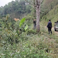 Chính Chủ Bán Nhanh Gấp Giá đầu Tư Diện Tích Hơn 200ha, Có Suối Chảy Dọc 3,2km Tại Kỳ Sơn - Hòa Bình Cách Hn 55km