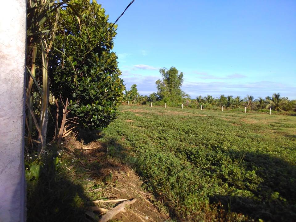 Bán Đất trồng cây gần sông 3000m2 Ninh Sơn, huyện nhơn sơn, view sông, đường oto !