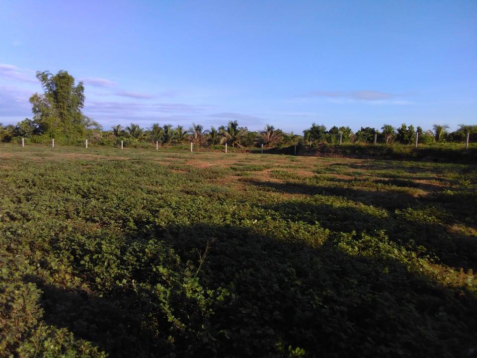 Bán Đất trồng cây gần sông 3000m2, Ninh thuận, Ninh Sơn, huyện nhơn sơn, view sông, đường oto !