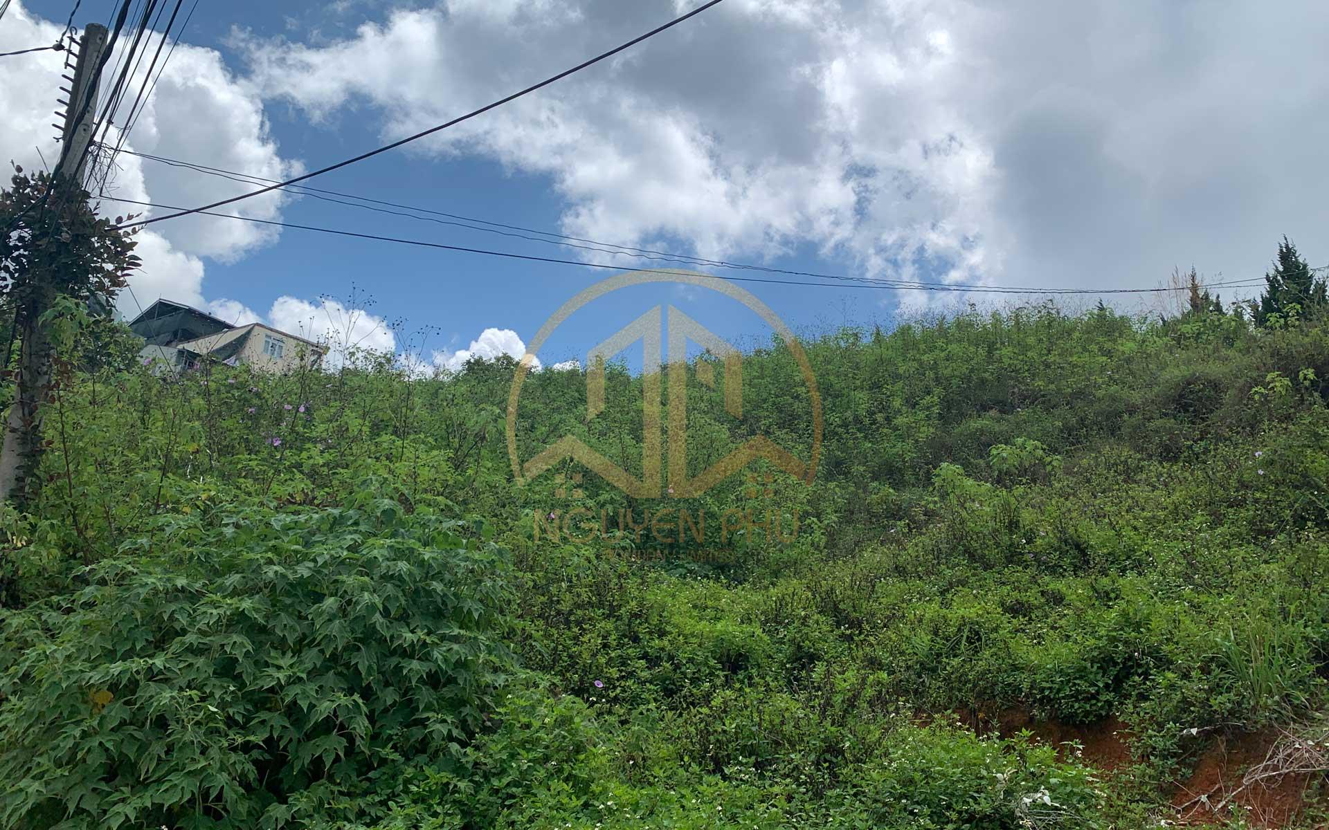 Bán đất Hoàng Hoa Thám Đà Lạt diện tích 1135m² view cực đẹp, đồi thông thoáng đãng