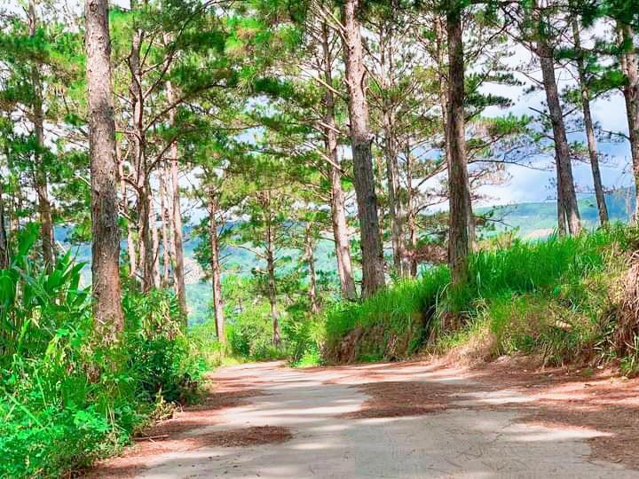 Cần bán Đất đường 20, Xã Trạm Hành, Diện tích 500m², Giá 930 Triệu
