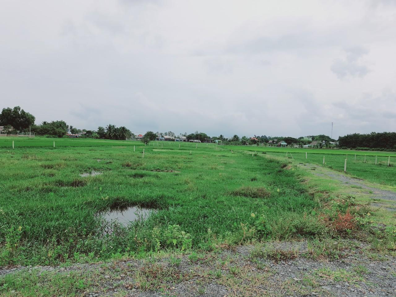 Cần bán Căn hộ chung cư đường Tỉnh Lộ 7, Xã Trung Lập Hạ, Diện tích 518m², Giá Thương lượng - LH: 0933874128