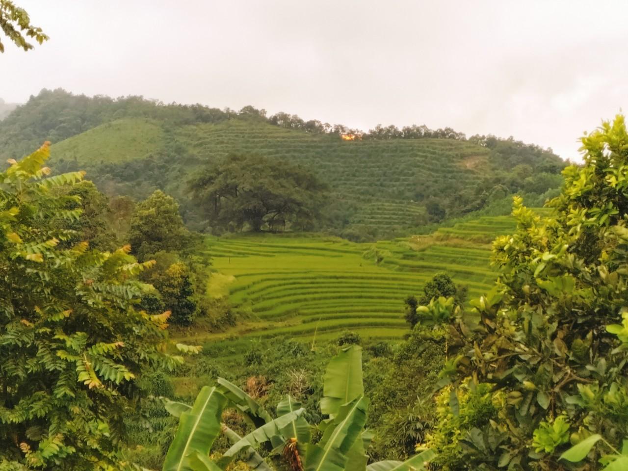 Cần bán Đất đường Quốc Lộ 6, Xã Hợp Phong, Diện tích 1000m², Giá 800 Triệu - LH: 0947266511
