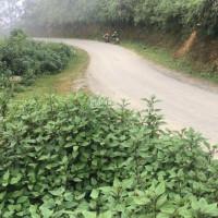 12 Tỷ 1500 M2 đất Tà Xùa, Bắc Yên, Sơn La đẹp